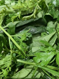 carrot greens, basil parsley, spinach for salads or pesto is a tasty way to reduce food waste.
